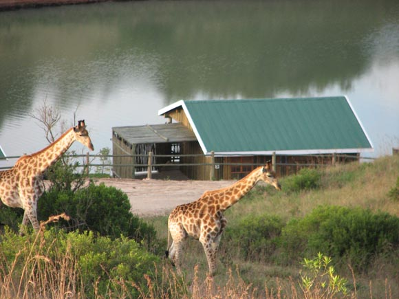 Lake Eland Game Reserve