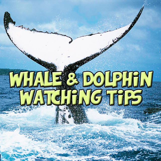 Whale and dolphin watching tips